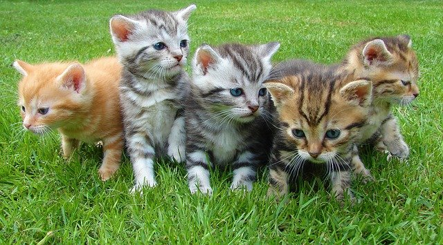 koťata na trávníku