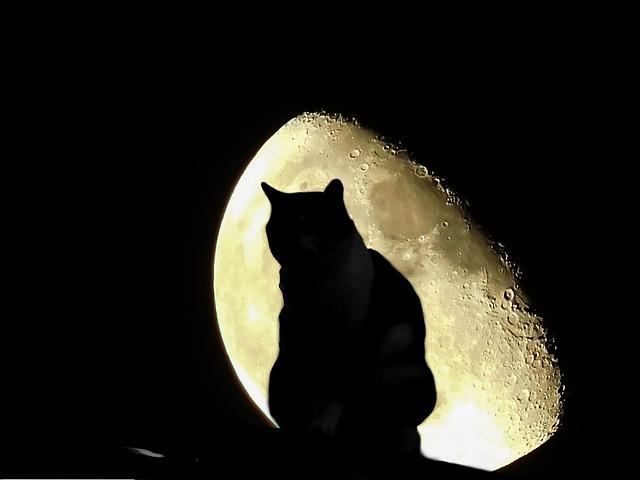 kočka a měsíc