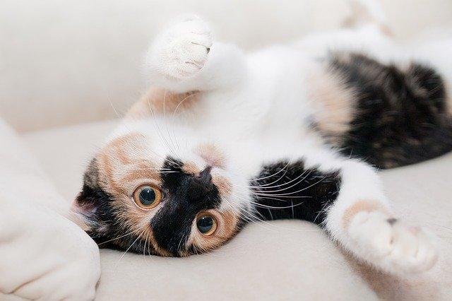 kočka při relaxaci.jpg