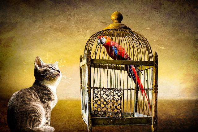 kočka a papoušek.jpg