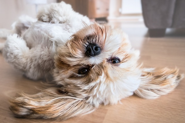 pes na zádech