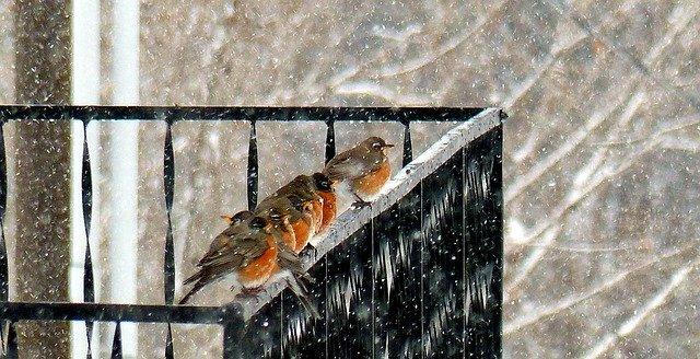 ptáčci na zábradlí